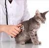 Ветеринарные клиники в Верхнеуральске